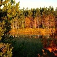 Озеро Пионерское :: Лариса Димитрова