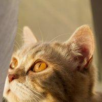 Кошка :: Николай Сухоруков