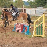 Прыжок через барьер в конкуре. :: Виктор Евстратов