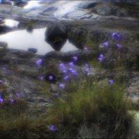 И на камнях растут цветы :: galina bronnikova