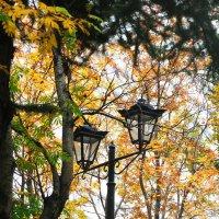 От фонаря, что здесь неподалёку С клочком зелёной и светящейся листвы.... :: Анна Приходько