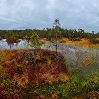 Пасмурный день на осеннем болоте. :: Фёдор. Лашков