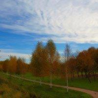 Осень на Яузе.Березки... :: анна нестерова