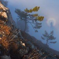 Брокненский призрак :: Zifa Dimitrieva