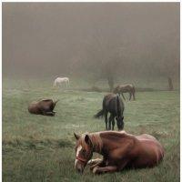 лошади :: Татьяна Найдёнова