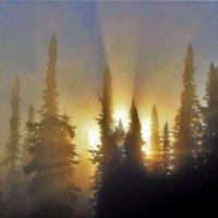 Солнце пробило утренний туман :: Сергей Чиняев