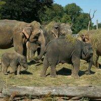 Слоновий  хоровод :: IURII