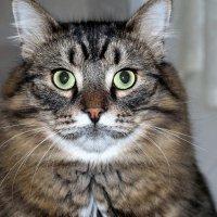Питерский кот Веня :: Marina Pavlova