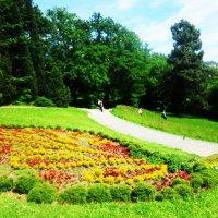 Павлин из цветов :: татьяна