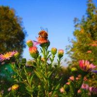 Осенние цветы ! :: Татьяна ❧