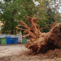 Корень большого дерева :: Николай Н