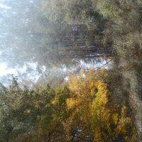 Туман лесной :: Дмитрий