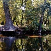 В старом парке :: Нина Корешкова