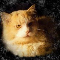 Ночью с улицы ко мне зайдёт -  А вернее с крыши – рыжий кот. :: Людмила Богданова (Скачко)