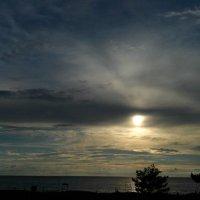 Красивый пляж вечером на Финском заливе :: Ольга Мореходова