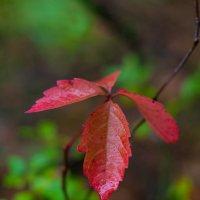 Осень начинается :: Albina