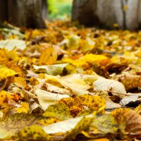 Что такое осень - это ... :: Степан Поросков