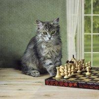 Масяня шахматистка :: Ирина Приходько