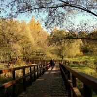 Осенняя прогулка :: анна нестерова