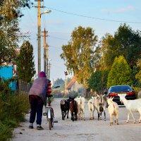 Утро в деревне. :: Сергей Ковалевский