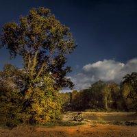 Ораниенбаум. Старый парк. :: Лариса Шамбраева