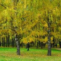 Осенний этюд. :: Александр Атаулин