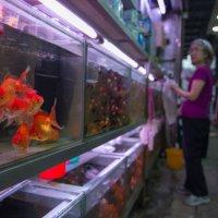 золотые рыбки :: Sofia Rakitskaia