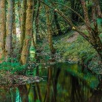 Ручей в лесу... :: juriy luskin
