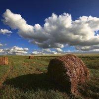 Скошеные травы, сена жёлтые валки :: Сергей Жуков