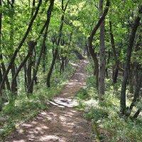Дорога к храму (03) :: Александр Морозов