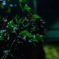 Сирень в ночи :: Андрей Наумов