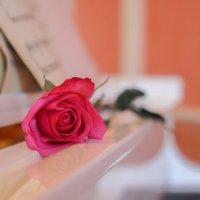 Роза :: Наташа Агафонова
