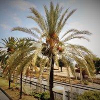 пальма :: kuta75 оля оля