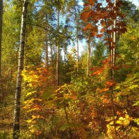 Осенняя палитра :: Aleksandr Shishin