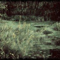Любимое болотце :: Татьяна Смирнова
