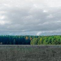 Осени цвета :: Микто (Mikto) Михаил Носков