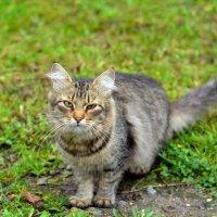 Кошка с грустью в глазах... :: Марина Романова