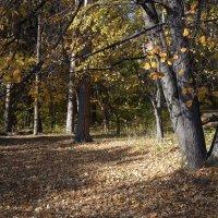 Осень. :: Mc!! .....