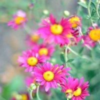 Осенние цветы :: Юрий Фёдоров