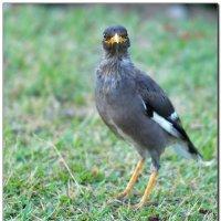Любопытный птенец. :: Leonid Korenfeld