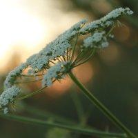 Цветок :: Ксения Куценко