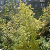 Золотая осень под моим окном :: Татьяна Юрасова