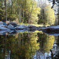 утро в лесу :: Alexandr Staroverov