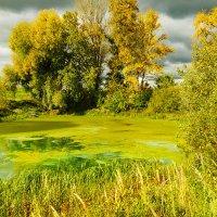 Осень  на  старом пруду :: Алла ************