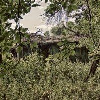Дом в лесу :: Anton Shumaev