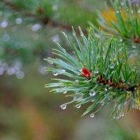 Дождь в лесу :: Александр Кокоулин