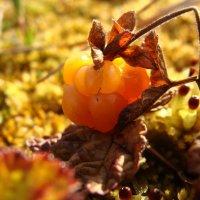 Янтарная ягода. :: Елена
