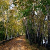 Осень пришла на аллею :: Екатерина Торганская