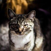 Дикая-домашняя кошка :: Татьяна Зайцева