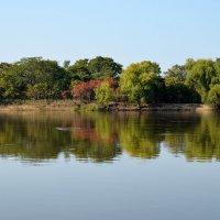 Река Уссури :: Александр Морозов